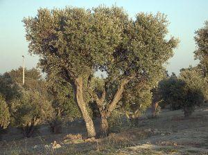 אלמנט העץ
